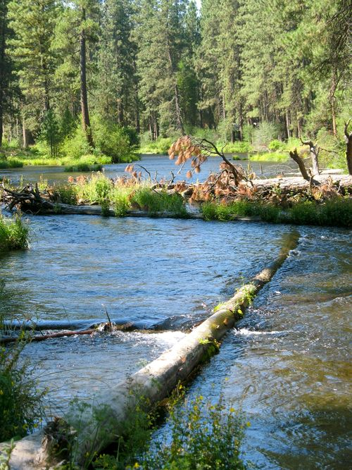 Metolius River Oregon